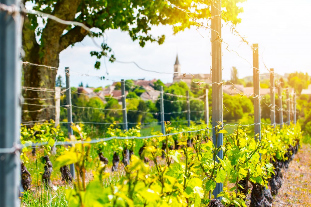 French vineyard with beautiful village in background in spring season