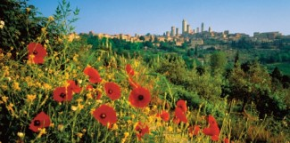 Poppies on hillside in Tuscany