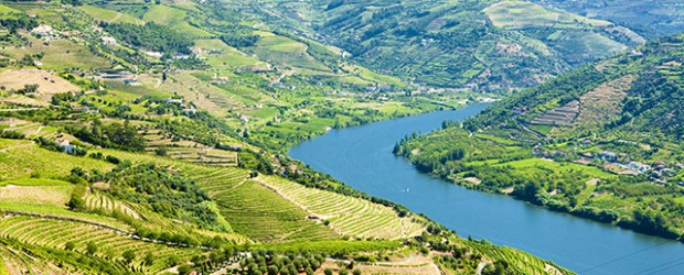 Vineyards in Douro Valley, Portugal.