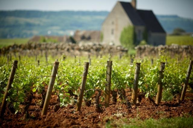 Vineyards-of-Olivier-06b5a690709f53546c0b5c50c2b2c21c