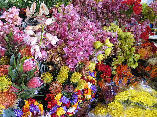 funchal-flowers-by-jlr-sousa