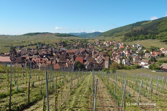 Vineyards above Riquewihr