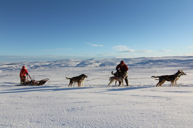 0006db_norway_Husk-dog-sledding-g