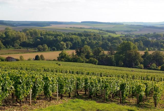 vignoble des coteaux de Chablis (Bourgogne France)