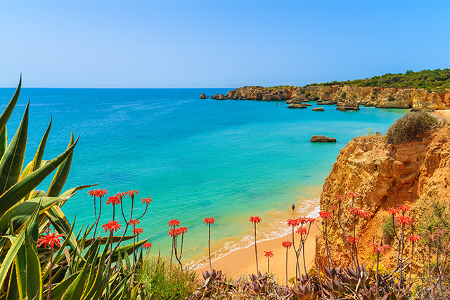 Tropical flowers on beautiful Praia da Rocha beach, Algarve, Portugal.