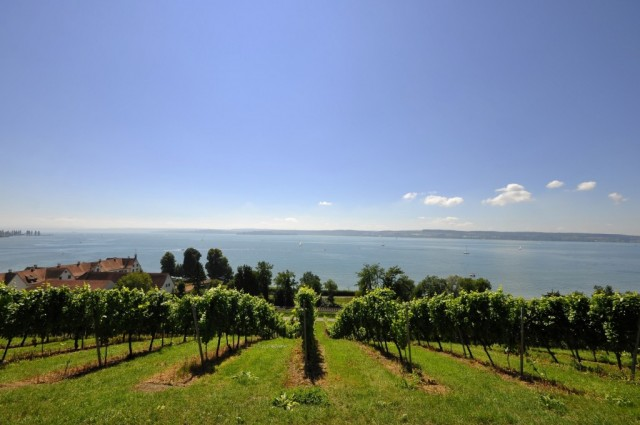 Vineyards set on hilltop overlooking Lake Constance.