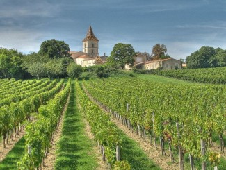 Classic French countryside criss crossed with vineyards...