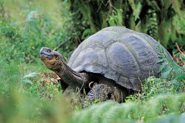 Giant-tortoise-4eaf7a313b2c765afcf7158205174b75