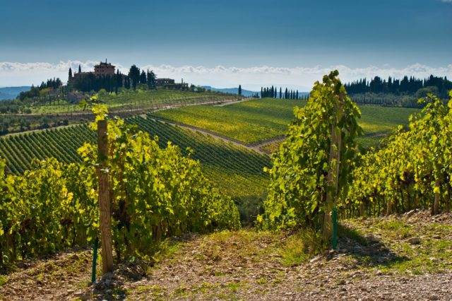 Vineyards in Chianti region. (C) DeepGreen | shutterstock.com