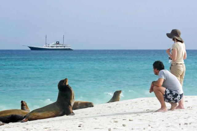 Sea-lions-68f028217411a6ab203cd03516b942de
