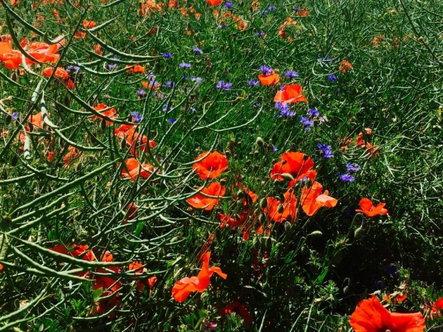 Wildflowers-gastro-burgundy