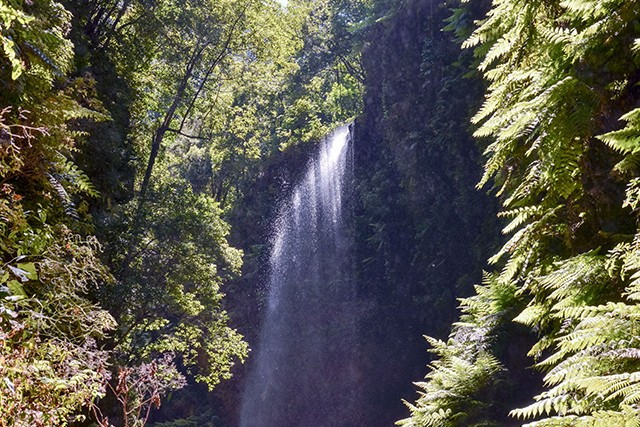 The beautiful island of La Palma in the Canaries is a UNESCO Biosphere Reserve, and on our guided Walking on La Palma holiday we'll head, on Day 3, to the huge shimmering laurisilva rainforests of Cubo de la Galga – walking underneath a pretty waterfall.