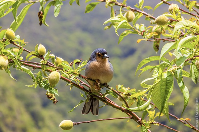 Bird sitting on a tree in madeira
